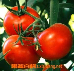 番茄的食用禁忌